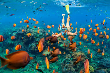 person snorkeling amongst the fishes