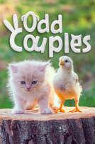 Odd Couples cover art