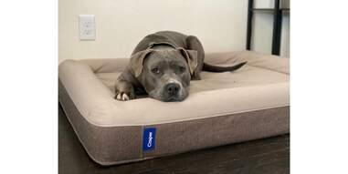 Dog in Casper bed