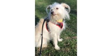 Dog with Fi collar