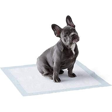 Dog and Puppy Pads