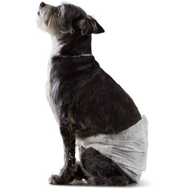 Male Dog Wrap Disposable Diapers