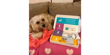 Dog with DNA test kit