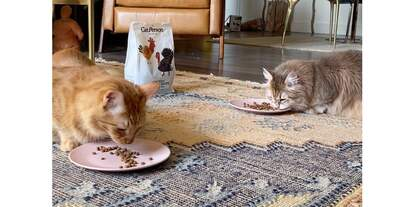 Cats eating Cat Person food