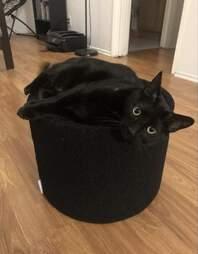 Cat in a Kip Cushion