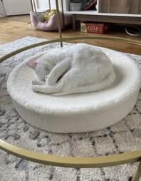cat on a Kip Cushion