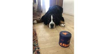 dog lying and staring longingly at can of Finn Multivitamin