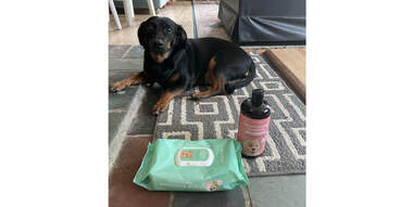 dog on floor with Wild One Grooming Kit Shampoo and Wipes