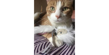cat with the SmartyKat Chitter Critter toy