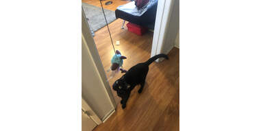 cat playing with Kong feather teaser toy