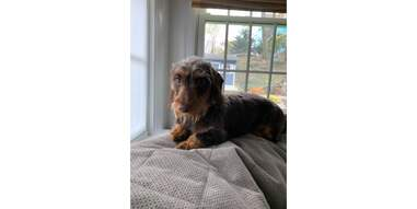 dog sitting by window on top of Orvis quilted throw