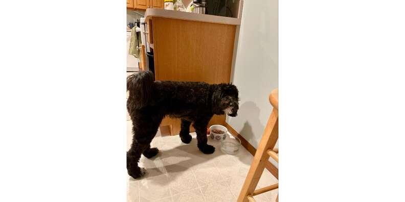 dog eating Jinx dog food