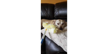 dog and swiffer duster extender