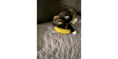 cat and yeowww banana cat toy