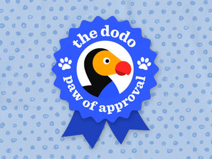 the dodo paw of approval logo