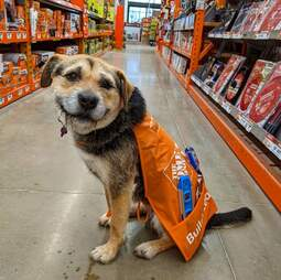 Perro trabaja en Home Depot