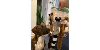 zippy paws skinny peltz dog toys