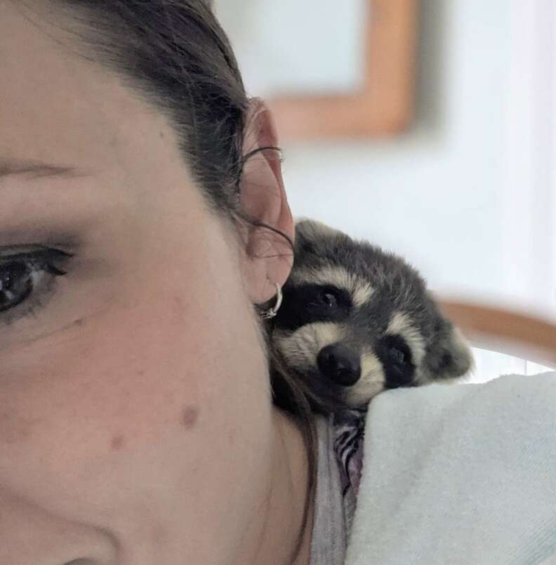 Baby raccoon rescued from side of road