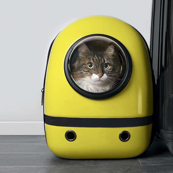 Travel Carriers For Every Type Of Pet — And Their Humans
