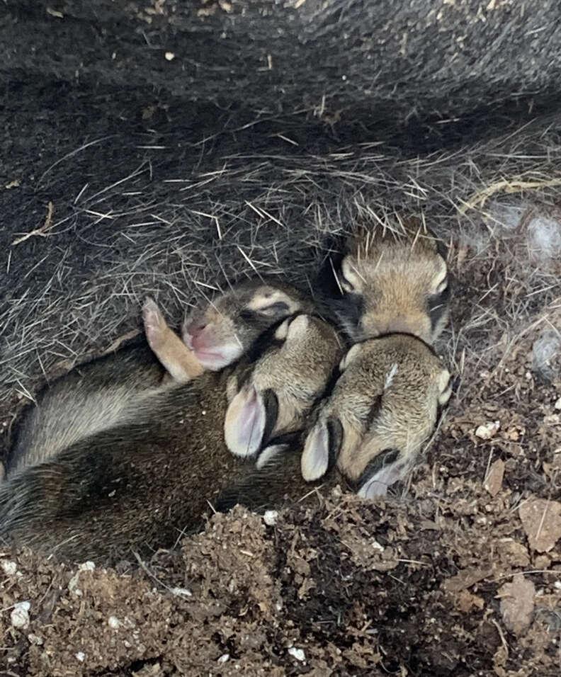 Bunnies found at garden center
