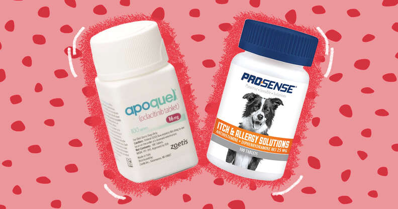 Dog allergy medicine