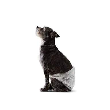 Amazon Basics Male Dog Disposable Diapers (30-Pack)