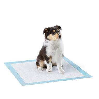 Amazon Basics Dog and Puppy Pads (80-Count)