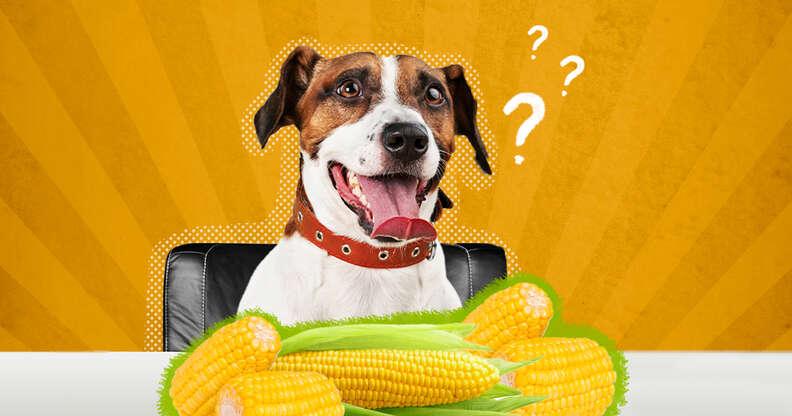 dog with corn on the cob