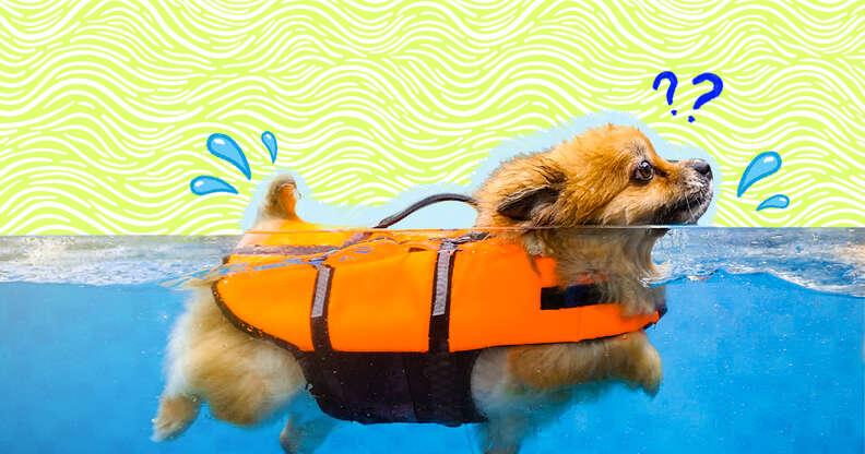 dog swimming with life jacket