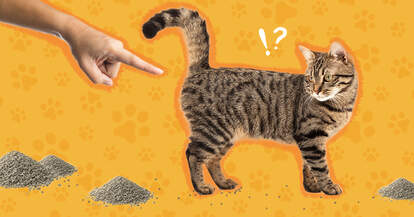 Cat tracking litter