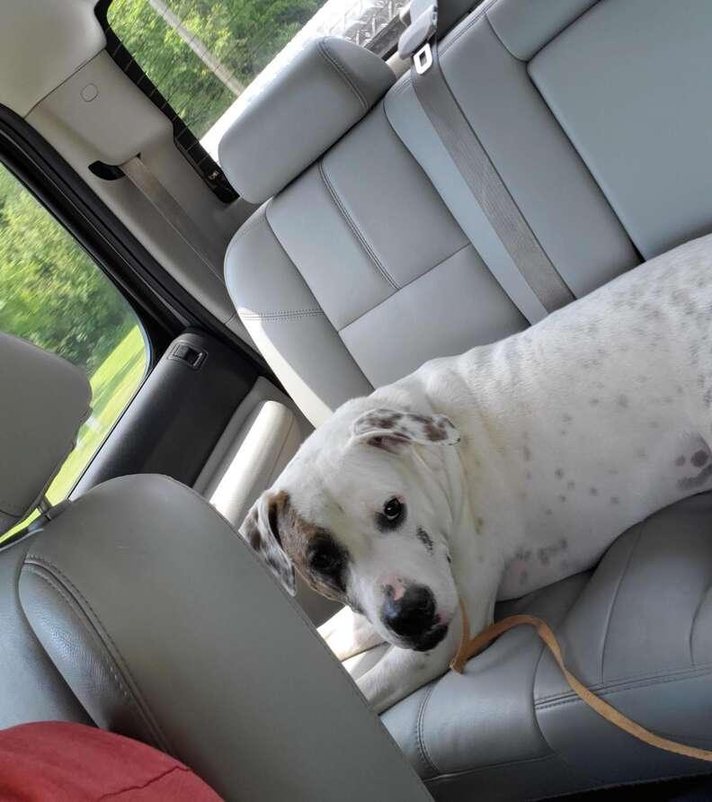 Guy finds abandoned pit bull in dog park