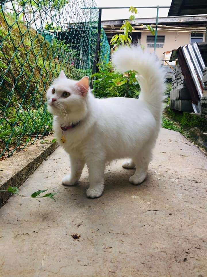 Skinny cat transforms into fluffy girl