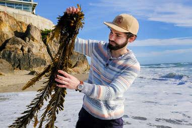 12 tides seaweed kelp ocean seafood eating snacks
