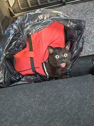 Dog leads owner to cat trapped in a cooler