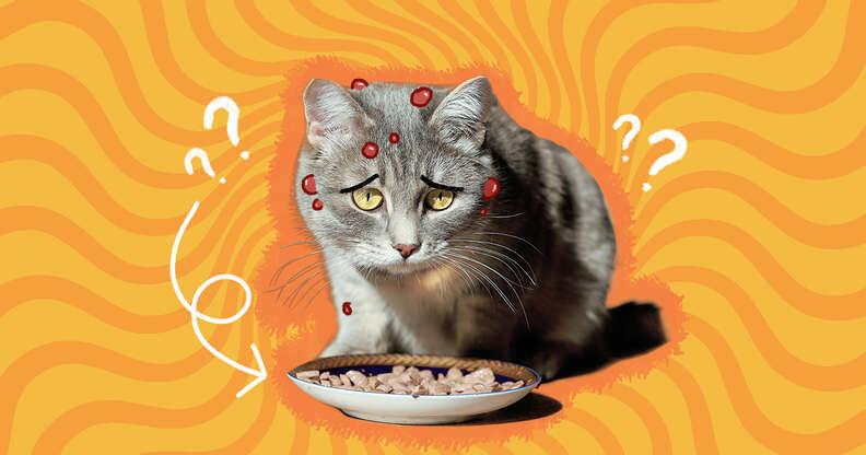 cat food allergies