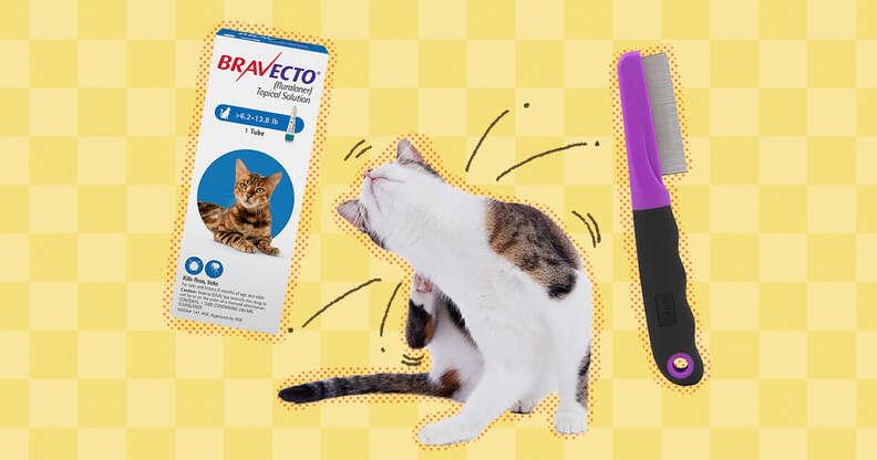 Cat flea removal tools
