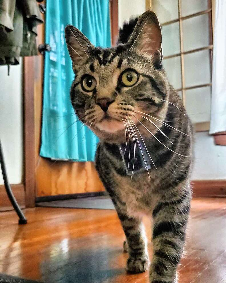 cat wearing a camera
