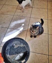 cat brings family trash gifts
