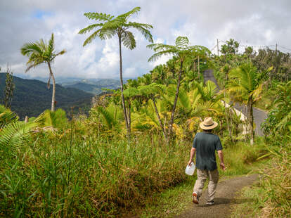 hiker in El Yunque National Forest