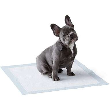 Amazon Basics Dog and Puppy Pads