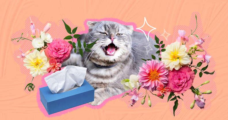 Cat seasonal allergies