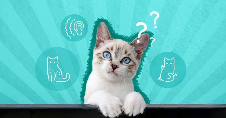 cat allergy signs