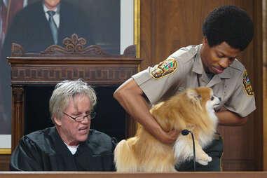 gary busey pet judge