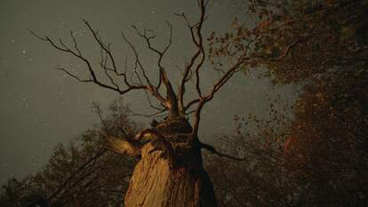 the hidden life of trees documentary