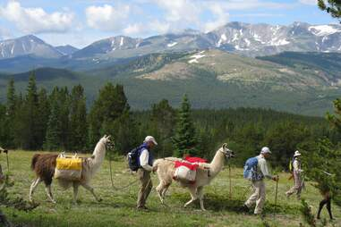 a group of hikers and llamas walking through the mountains