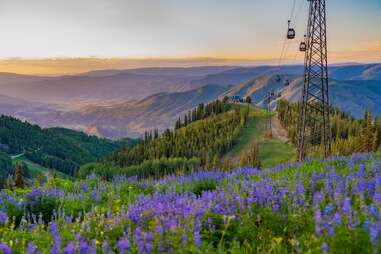a gondola over a mountain laced with lavender flowers