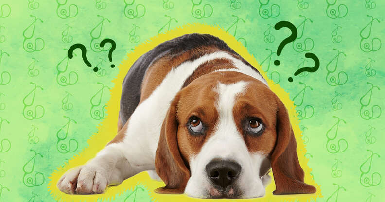 dog with question marks