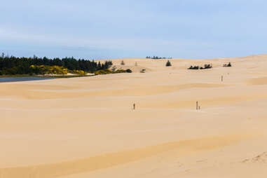rolling dunes leading to a misty beach