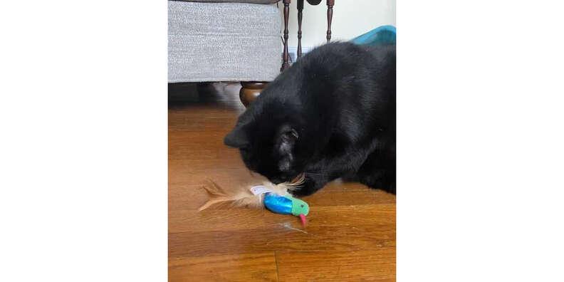 cat and smartykat hum singer