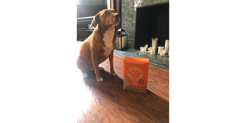 dog with buddy biscuits